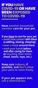 English COVID and Pets Poster, Back