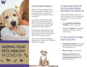 English COVID and Pets trifold, front